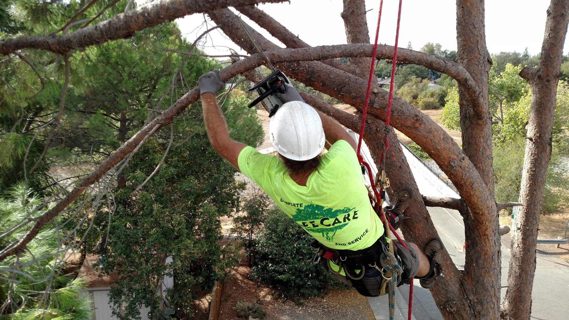 tree removal career