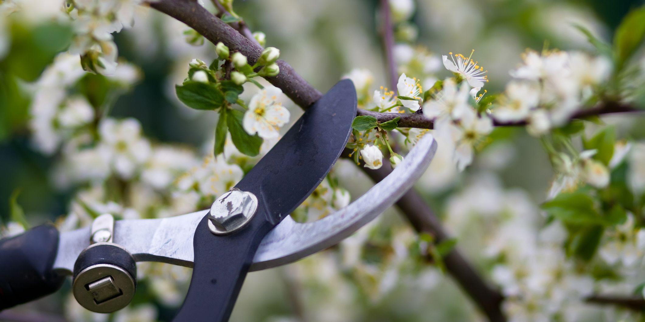 guide-pruning-garden